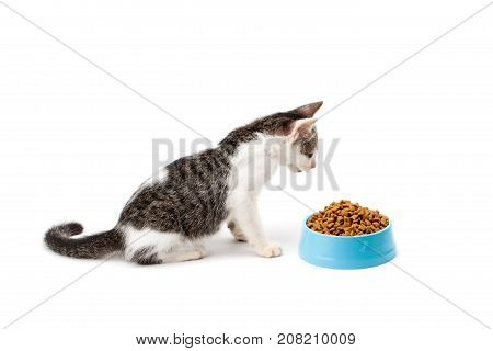 black and white kitten look at pet dried food in cyan plastic bowl on white background