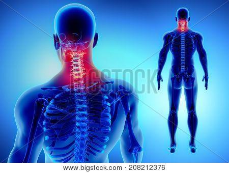 3D Illustration Of Cervical Spine, Medical Concept.
