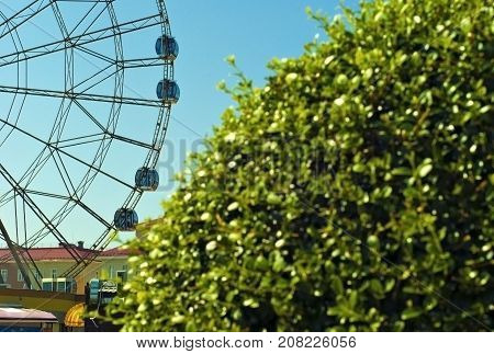 A view of the fragment of the Ferris wheel from behind the bush. The bush is blurred the focus is on the Ferris wheel