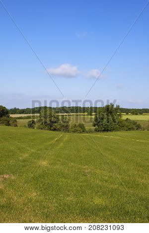 Hedgerow And Hay Field