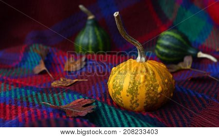 Warty Yellow Ornamental Gourd With Leaves And Green Gourds