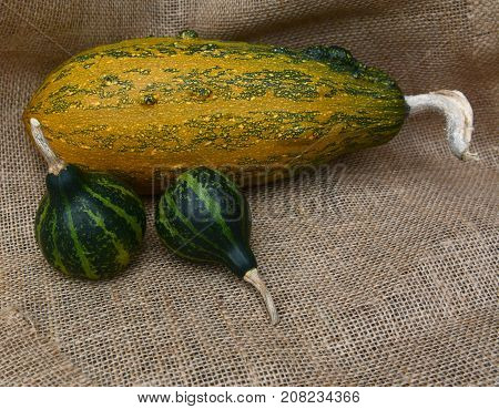 Two Spinning Gourds On Hessian With Large Striped Squash