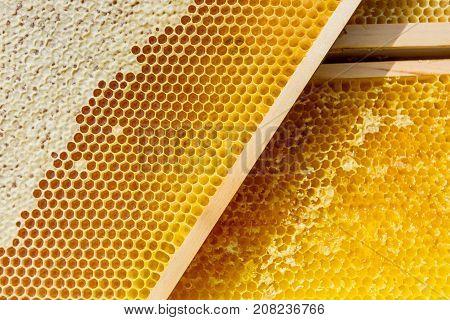 Beekeeping, beekeeper, bee, honey domestic breed hive honey bee
