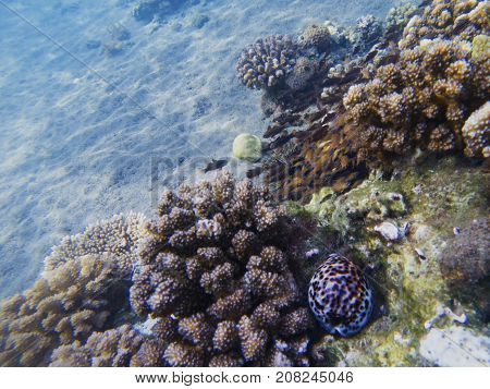 Coral reef growth. Exotic island shore shallow water. Tropical seashore landscape underwater photo. Coral reef animal. Sea nature. Sea fish in coral. Marine life undersea. Sunny coral landscape