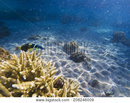 Tropical fish in spiky coral. Exotic island shore shallow water. Tropical seashore landscape underwater photo. Coral reef animal. Sea nature. Sea fish in coral. Marine life undersea. Coral landscape