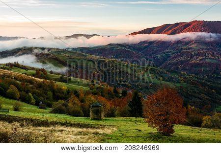 Rural Area On Foggy Autumn Morning