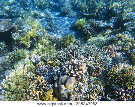 Coral reef diversity. Exotic island shore shallow water. Tropical seashore landscape underwater photo. Coral reef animal. Sea nature. Sea fish in coral. Marine life undersea. Sunny coral landscape