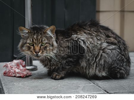homeless dirty cat is eating meat outdoors