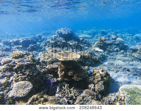 Table corals panorama. Exotic island shore shallow water. Tropical seashore landscape underwater photo. Coral reef animal. Sea nature. Sea fish in coral. Undersea view of marine life. Coral landscape