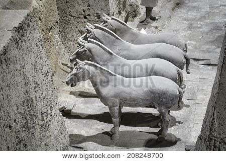 Xian, China - October 4, 2017: Terracotta Army Horses.three Pits In Museum Contain More Than 8000 So