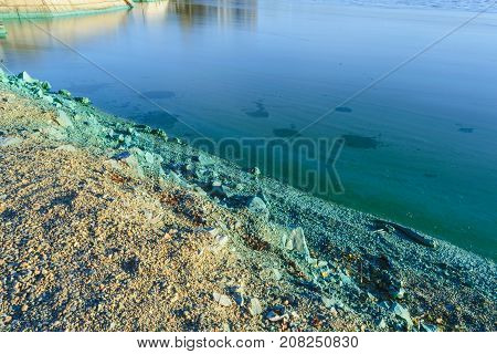 The shore of a pond infected with cyanobacteria. Blue-green algae is an ecological disaster.
