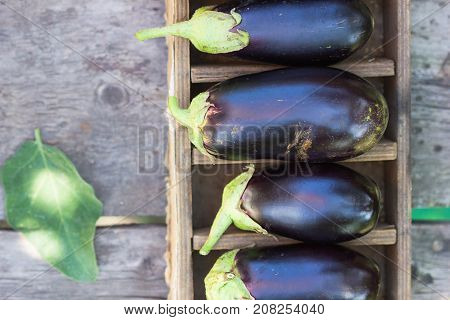 Fresh raw Purple Eggplant in a special box for Eggplant on gray wooden background. Top view blank space.
