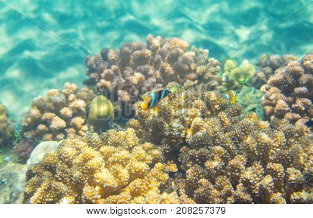 Turquoise blue water and coral reef. Tropical seashore inhabitant underwater photo. Coral reef animal. Warm sea nature. Colorful sea fish and corals. Undersea view of marine life. Coral reef landscape