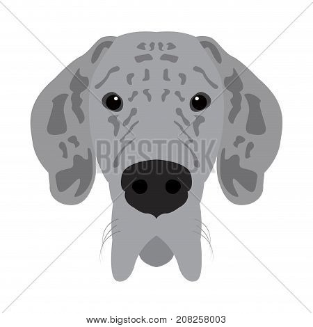 Isolated great dane avatar on a white background, Dog breed vector illustration
