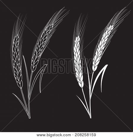 Black and white wheat ears isolated on black background. Set of wheat ears. Background for farms and bakeries. Collection of elements for company logos, print products, web decor or other design.