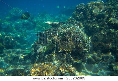 Seascape with coral reef. Tropical seashore inhabitants underwater photo. Coral reef animal. Warm sea nature. Colorful sea fish and coral. Undersea view of marine life. Coral reef landscape