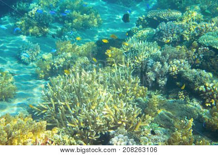 Shallow sea coral reef. Tropical seashore inhabitants underwater photo. Coral reef animal. Natural aquarium background. Tropic sea fish and coral. Undersea view of marine life. Coral reef landscape