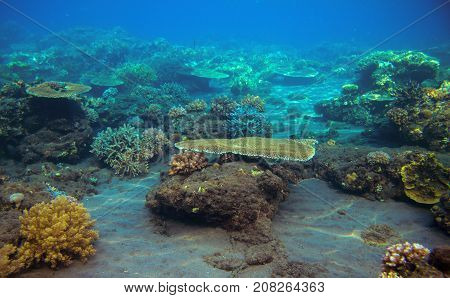 Sea bottom with coral reef. Tropical seashore inhabitants underwater photo. Coral reef animal. Warm sea nature. Colorful sea fish and coral. Undersea view of marine life. Coral reef landscape