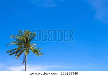 Palm tree and blue sky with place for text. Palm tree leaf. Tropical nature travel photo. Clear blue sky with green palm tree silhouette. Coconut palm banner template. Summer vacation background image