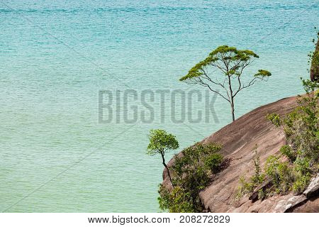 Small tree and big vast ocean scenery