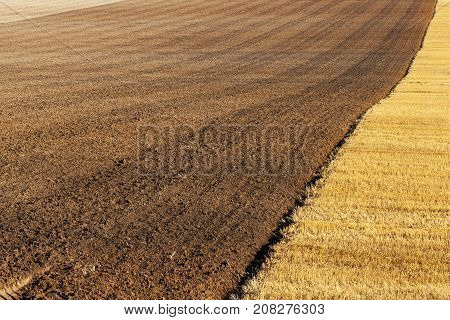 plowed half agricultural field after the harvest of oats. close-up photo in summer