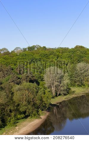 deciduous and coniferous trees in a mixed forest near a small river. feed from the top on a warm summer day. the river has dirty dark water