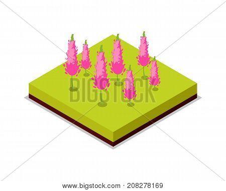 Pink flowers isometric 3D icon. Public park decorative plant and green grass vector illustration. Nature map element for summer parkland landscape design.