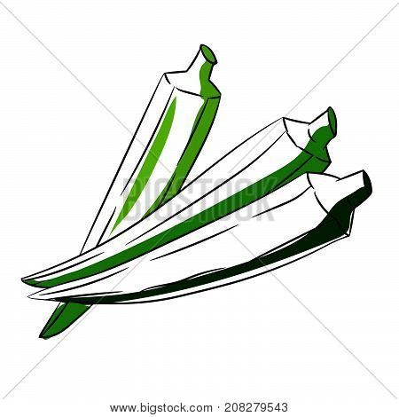 Hand drawn sketch of green Okra or Lady's Finger isolated on White Background Cartoon Vector Illustration.