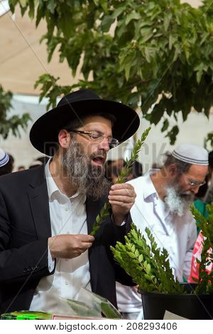 JERUSALEM, ISRAEL - OKTOBER 16, 2016: Traditional market before the holiday of Sukkot. Religious middle-aged Jew with gray beard is checking plant myrtle