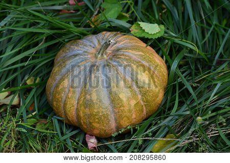 pumpkin on a green grass
