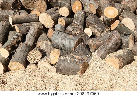 Natural wooden background-oak tree ready for processing