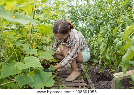 Beautiful woman working in green house on tomatoes