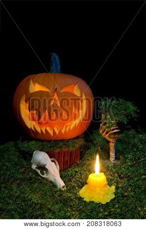 Halloween Pumpkin, Animal Skull, Goblet And Candles Glowing In The Dark On A Forest Moss.