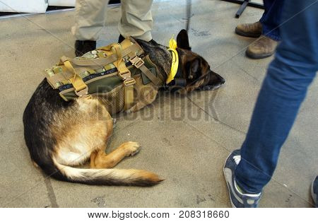 Kiev Ukraine - October 10 2017: Bullet-proof vest for service dog at the XIV International Specialized Exhibition ARMS AND SECURITY 2017 October 10-13 2017