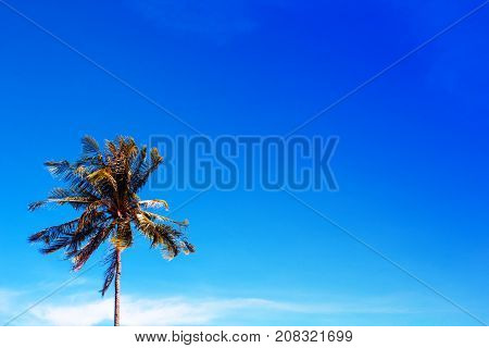 Palm tree on deep blue sky photo. Coco palm tree leaf banner with place for text. Tropical nature travel photo. Palm tree silhouette. Coconut palm poster template. Summer vacation background image