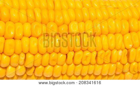 Yellow corn texture on white background. Sweet yellow corn seed closeup. Ripe vegetable harvest. Tasty vegetarian food. Ripe corn surface. Fresh summer vegetable. Organic food. Pop corn ingredient