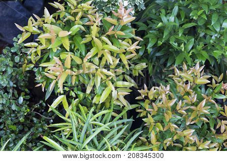 Houseplant photo background. Tropical foliage plant in exotic garden. White and green leaf of exotic plant. Relaxing view of natural greenery. South Asia tropical garden flora. Natural leaf ornament