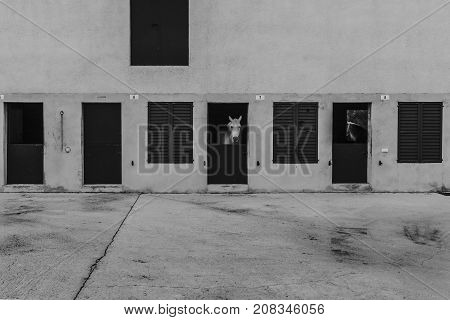 Black and white view of concrete horse stable