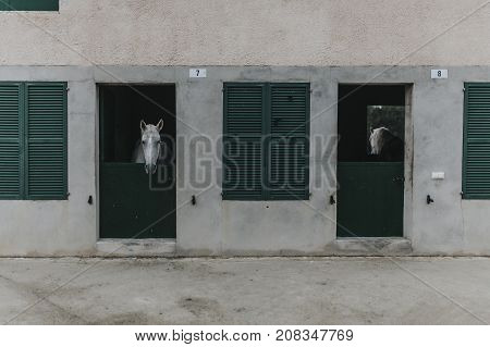 Concrete horse stable with a white horse showing the head through the door