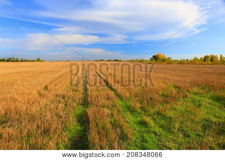 Stubble field after cutting grain