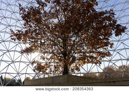 single tree in fall colors changing leavees inside a metal cage symbol environment destruction prison