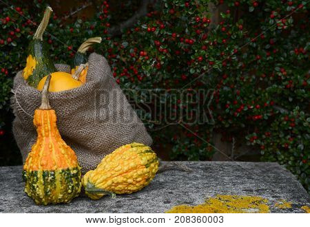 Burlap Sack Of Ornamental Gourds And Warty Squashes