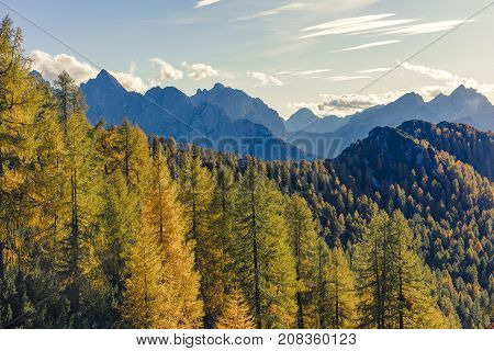 Magnificent view with golden larch forest in the foreground and high mountains in the background. The perfect place to escape from the stress of everyday life.