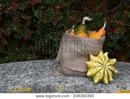 Full Sack Of Ornamental Gourds, With Crown Of Thorns Squash