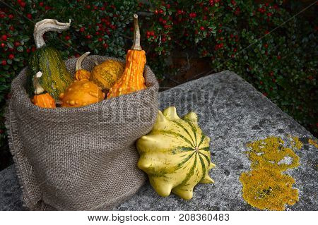 Hessian Sack Of Ornamental Gourds On A Stone Bench