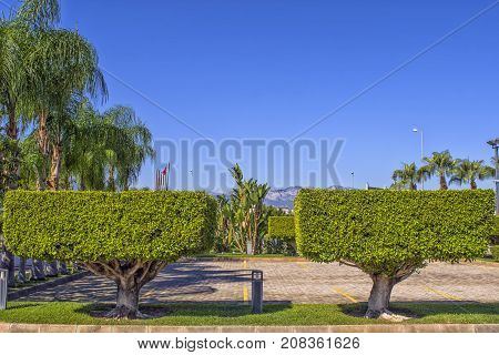 Two symmetric green cut trees in a cube forms. Landscape design in the Beach park. Antalya Turkey.