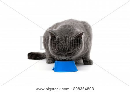 young cat eating food from a bowl on a white background. horizontal photo.