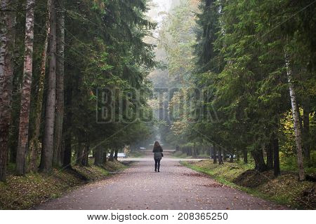 Girl walk in forest alone. Alone silhouette on path among high trees in early autumn season.