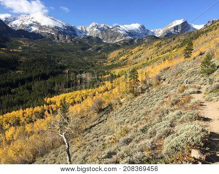Autumn aspen trees in Colorado