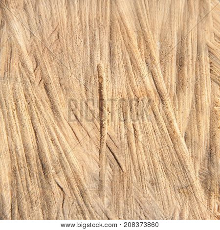 Details of oak cross section-natural wood background and texture